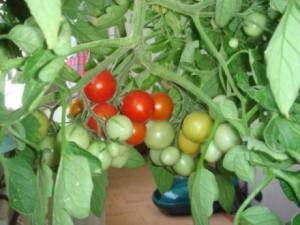 bitkisel urun destek (1)