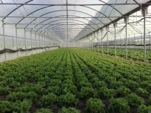bitkisel urun destek (3)