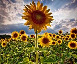 bitkisel urun destek (4)