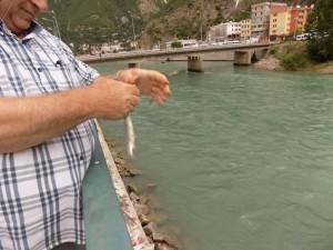 olta balıkçılığı (15)